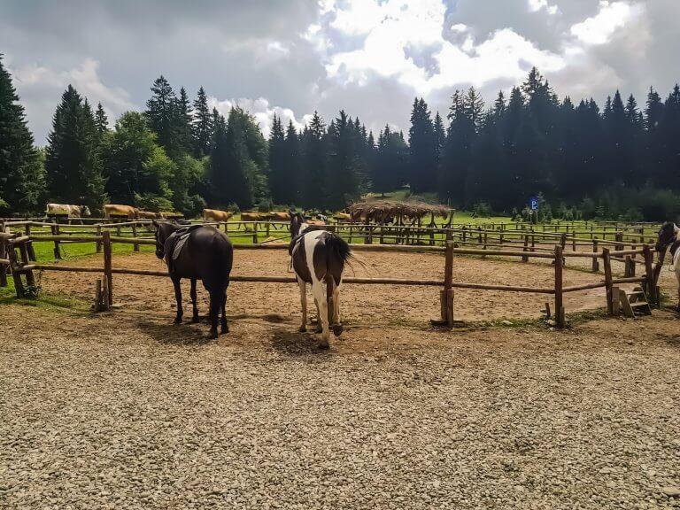 spiritul-cailor-poiana-brasov