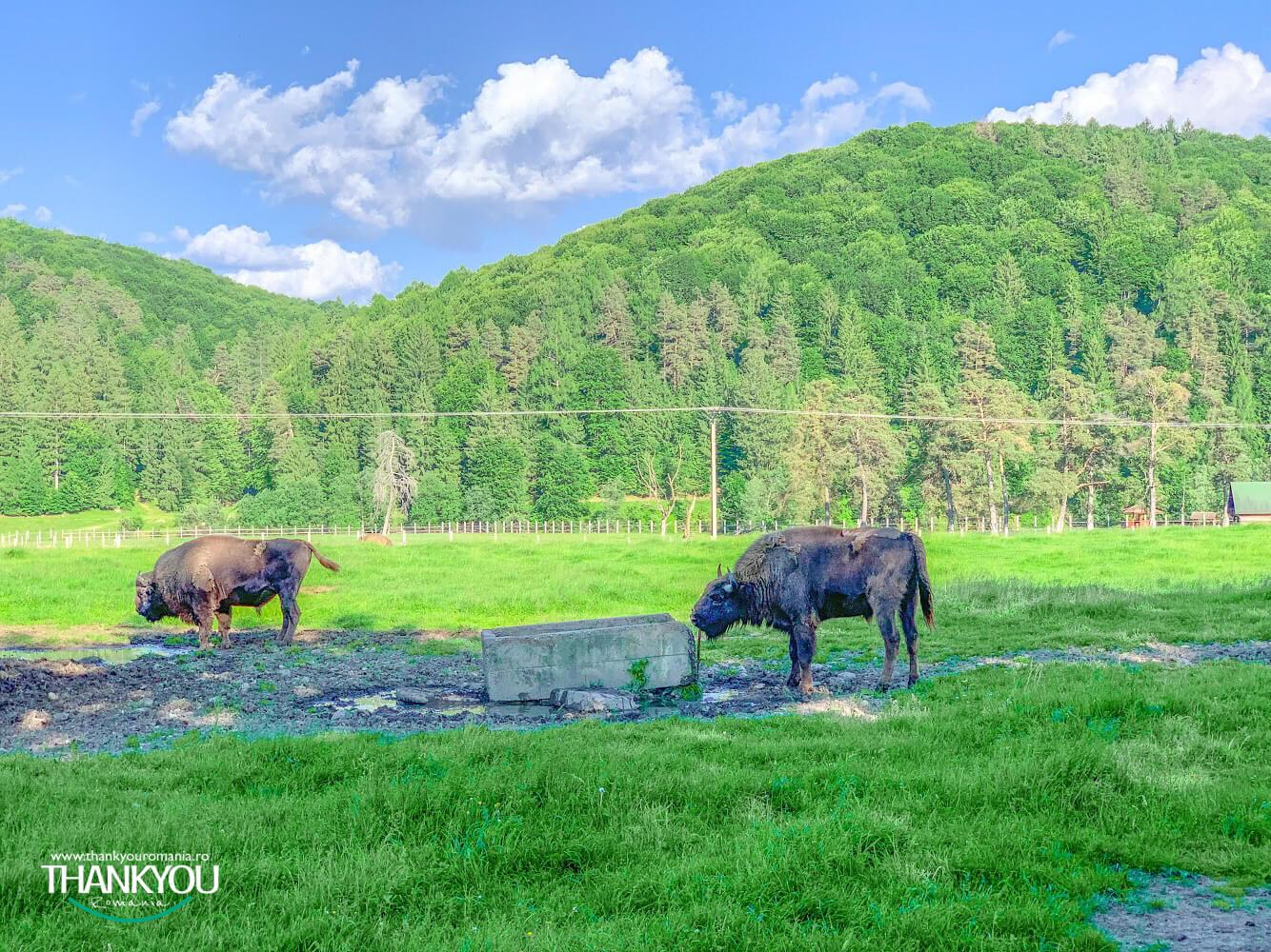 valea-zimbrilor